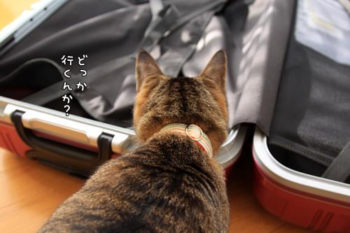 スーツケースがやってきたけれど_d0355333_14575666.jpg