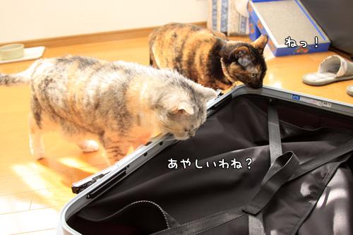 スーツケースがやってきたけれど_d0355333_14575738.jpg