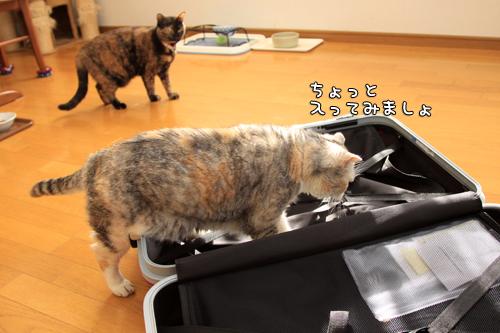 スーツケースがやってきたけれど_d0355333_14575754.jpg
