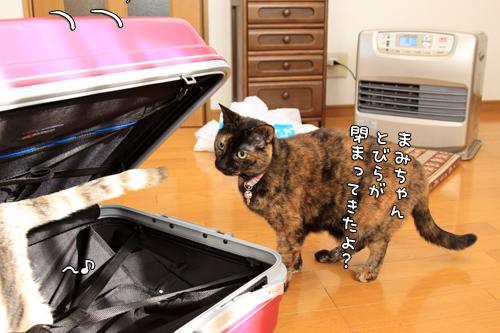 スーツケースがやってきたけれど_d0355333_14575759.jpg