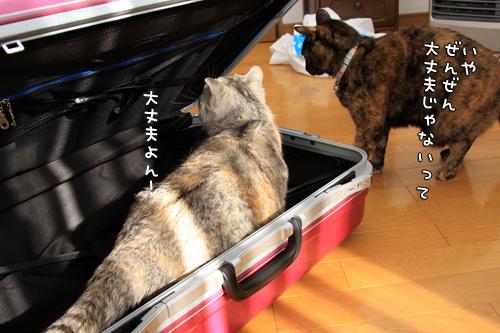 スーツケースがやってきたけれど_d0355333_14575784.jpg