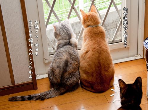 窓際にて。_d0355333_14591660.jpg