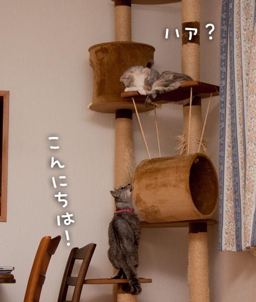 タワーでドキドキ_d0355333_14595657.jpg