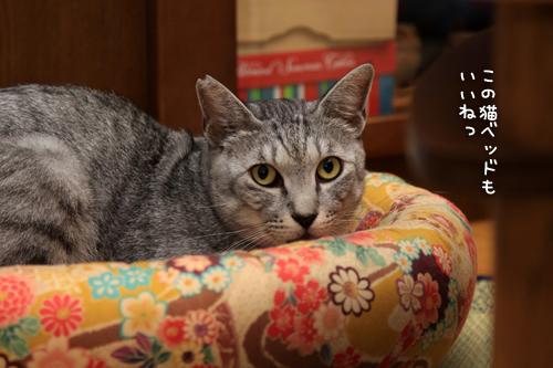 全部の猫ベッドが_d0355333_15011904.jpg