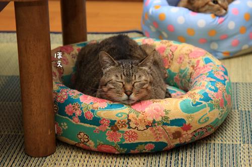 全部の猫ベッドが_d0355333_15011918.jpg