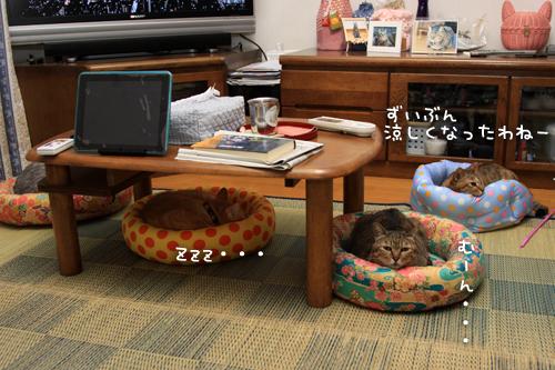 全部の猫ベッドが_d0355333_15011952.jpg
