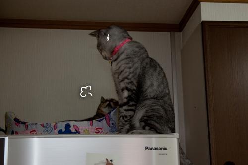 冷蔵庫の上の攻防!_d0355333_15021217.jpg