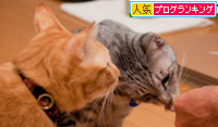 食いしん坊さん_d0355333_15023722.jpg