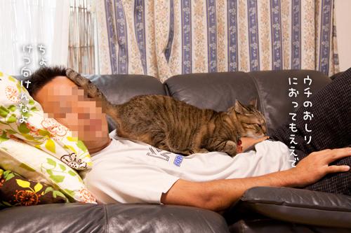 猫的親愛の情?_d0355333_15024050.jpg