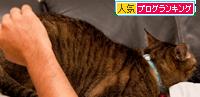 猫的親愛の情?_d0355333_15024249.jpg