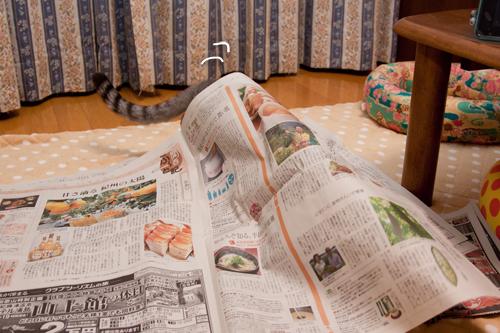 新聞遊びはたまんない!_d0355333_15033732.jpg