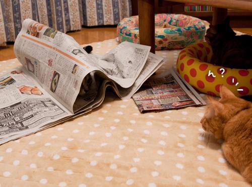 新聞遊びはたまんない!_d0355333_15033756.jpg