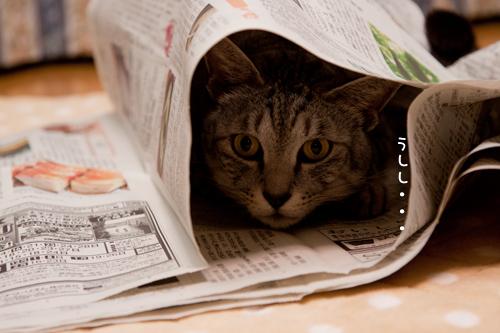 新聞遊びはたまんない!_d0355333_15033867.jpg