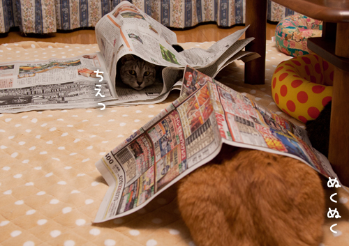 新聞遊びはたまんない!_d0355333_15033882.jpg