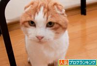 猫の表情_d0355333_15253106.jpg
