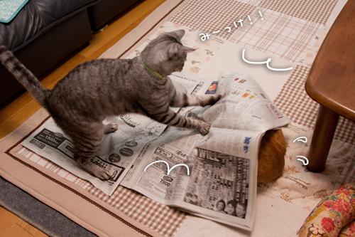 新聞紙の出番。_d0355333_15253411.jpg