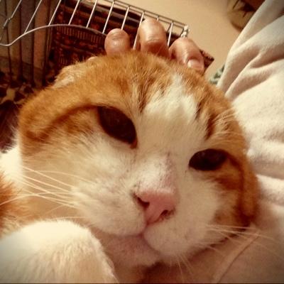 猫の表情_d0355333_15254011.jpg