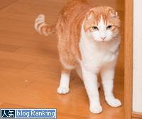 サービスエリアの猫_d0355333_15264083.jpg