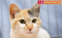 一人暮らしの猫飼いさんへ_d0355333_15265380.jpg