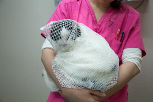 一人暮らしの猫飼いさんへ_d0355333_15265787.jpg