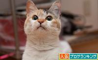 のんちゃん再手術_d0355333_15272589.jpg
