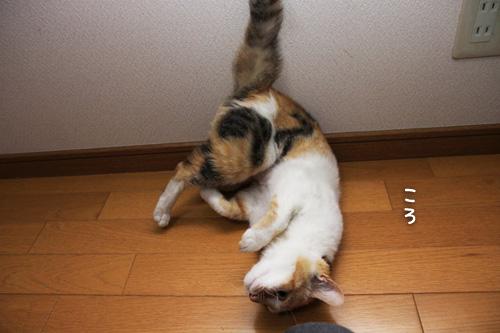 猫が変わる瞬間_d0355333_15274106.jpg