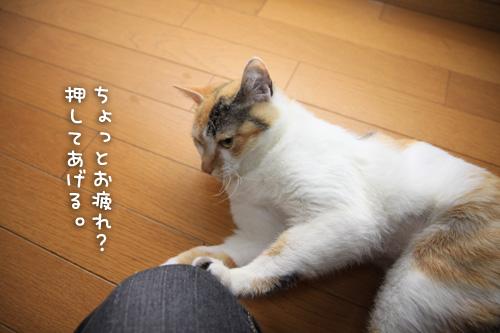 猫が変わる瞬間_d0355333_15274131.jpg