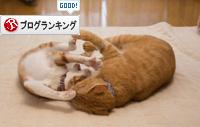 子猫パワー_d0355333_15313866.jpg