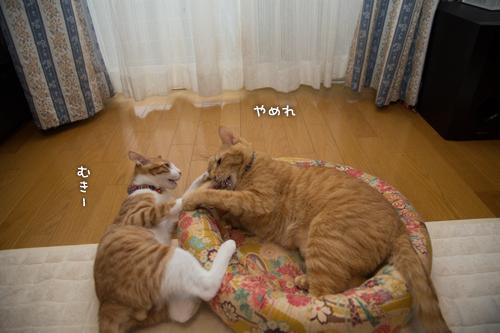 子猫パワー_d0355333_15315327.jpg