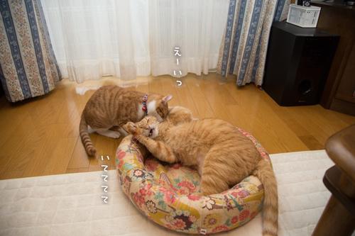 子猫パワー_d0355333_15315339.jpg