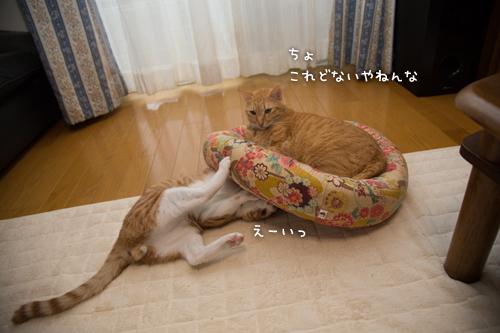子猫パワー_d0355333_15315378.jpg