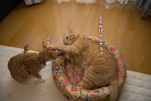 子猫パワー_d0355333_15315485.jpg