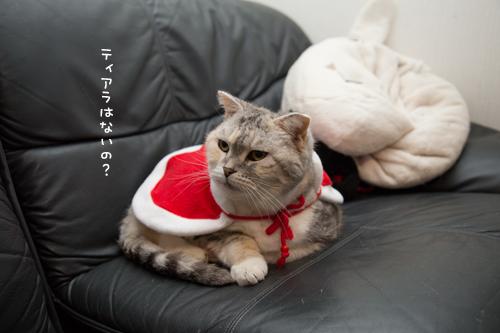 猫サンタがやってきた!_d0355333_15322918.jpg