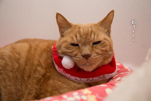 猫サンタがやってきた!_d0355333_15322936.jpg