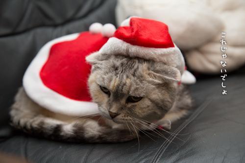 猫サンタがやってきた!_d0355333_15322945.jpg