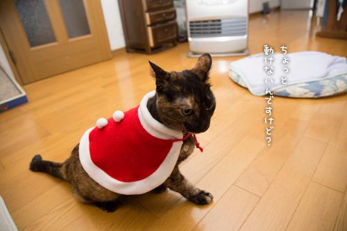 猫サンタがやってきた!_d0355333_15322968.jpg