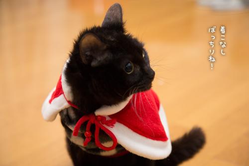 猫サンタがやってきた!_d0355333_15323041.jpg