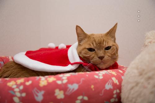 猫サンタがやってきた!_d0355333_15323097.jpg