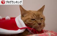 猫サンタがやってきた!_d0355333_15323141.jpg