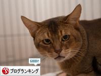 ちい太郎の近況報告_d0355333_16350924.jpg