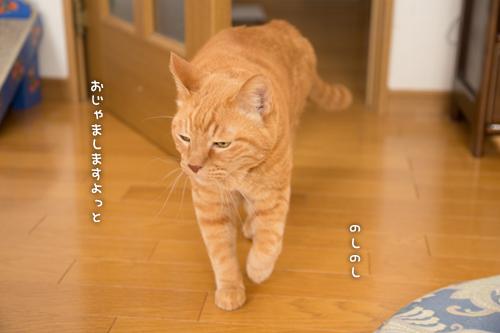 ソロくんの冒険_d0355333_16351529.jpg