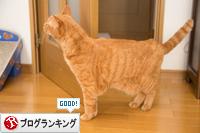 ソロくんの冒険_d0355333_16351639.jpg