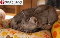 猫ざぶがやってきた_d0355333_16352542.jpg
