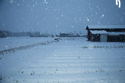 大雪にびっくり_d0355333_16355879.jpg