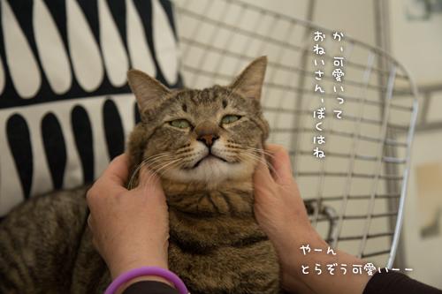 ネコハウスのみなさん_d0355333_16364670.jpg