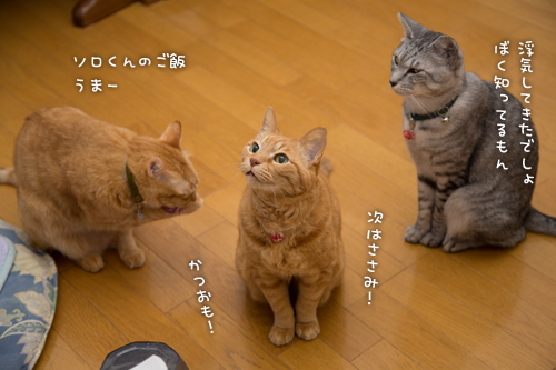 ネコハウスのみなさん_d0355333_16364718.jpg