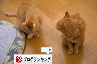 ネコハウスのみなさん_d0355333_16364799.jpg