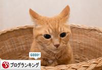 勝利(☆ω☆)_d0355333_16365456.jpg