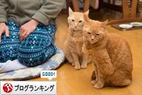 食べたぁぁぁぁ(☆ω☆)_d0355333_16365539.jpg