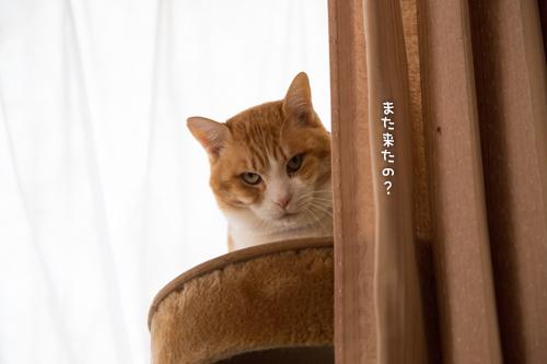 きゅうちゃん退院!_d0355333_16365664.jpg